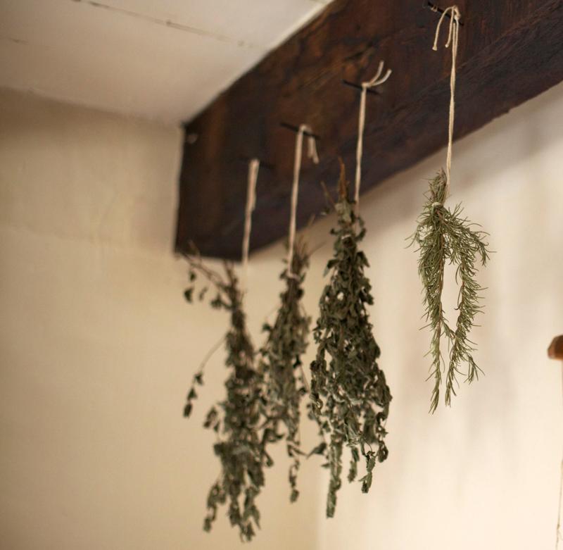 where i anti viral herbs