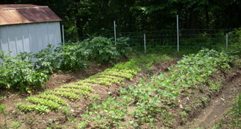 Homesteading Today Is Still Possible